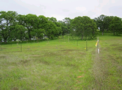 Protecting fruit trees from deer with fishing line