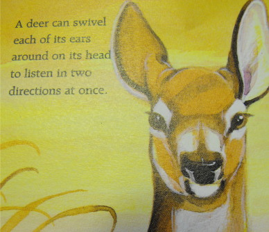 Awesome deer drawing