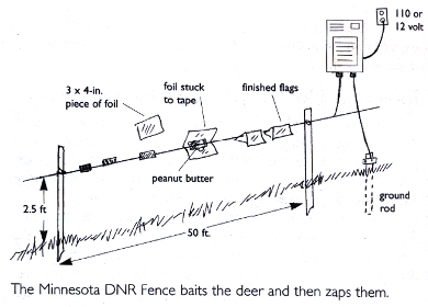 Minnesota DNR fence baits with peanut butter and zaps a deer where it counts